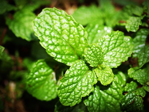FlavourArt Spearmint - Minze Aroma